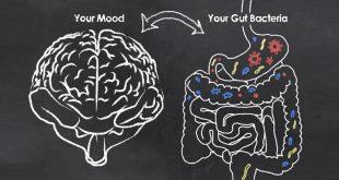 La sorprendente relación entre intestino y cerebro