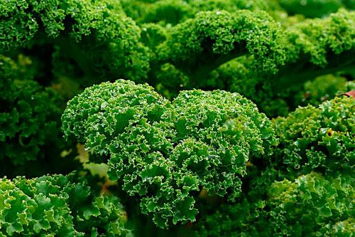 Las Kale - 6 mejores fuentes de calcio