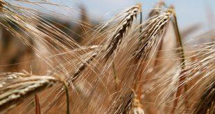 Intolerancia, alergia o sensibilidad al gluten. ¿Te identificas?