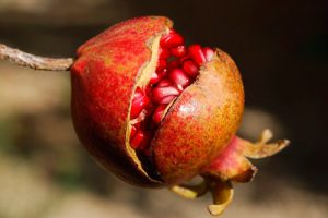 pomegranate-185456_640