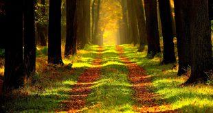 Terapia forestal, qué es y como ayuda a nuestro cuerpo