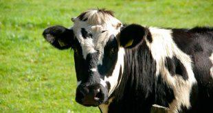 Diferencias científicas entre la leche convencional y la ecológica