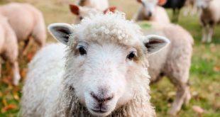 ¿Estamos condicionados a comer carne?
