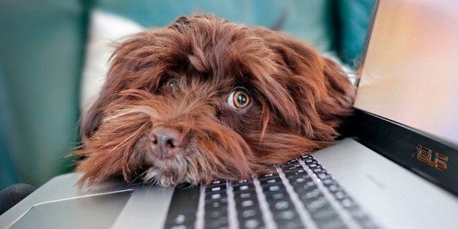 Imagen de un perro en un ordenador de alguien haciendo teletrabajo